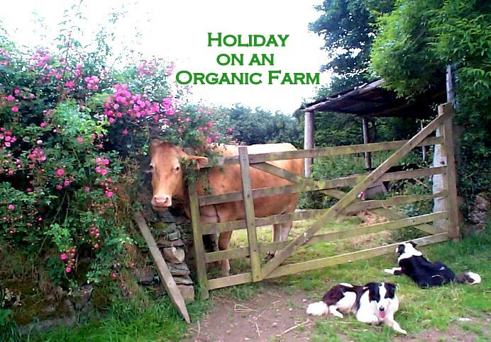 Polly and the dogs at the orchard gate at East Penrest Organic Farm