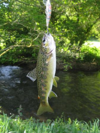 Trout from the River Inney